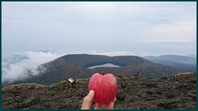 016 りんご