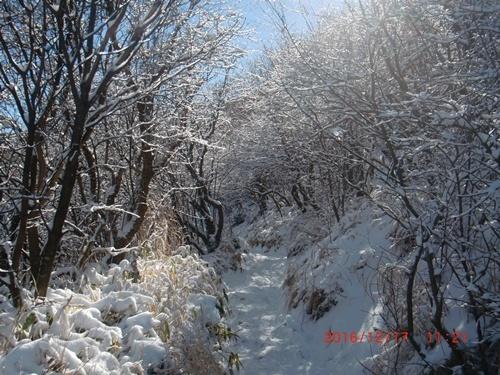 013 雪景色