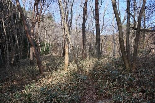 3ハイキング道