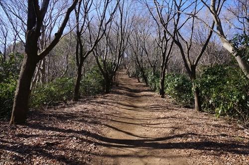 5ハイキング道.