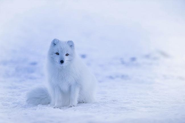 iceland-1979445_960_720.jpg