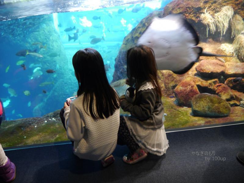 2016年1月4日撮影 新江ノ島水族館