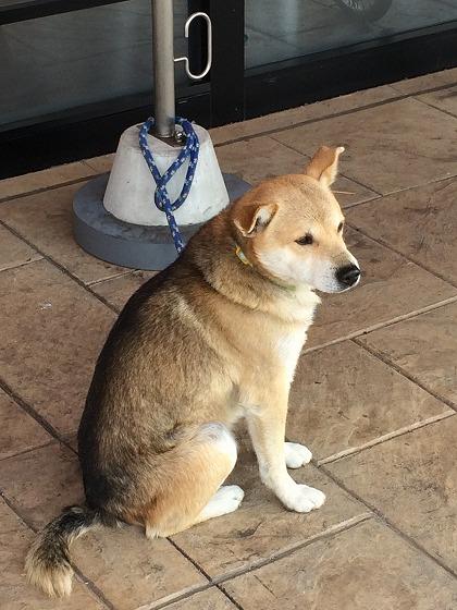 犬 012