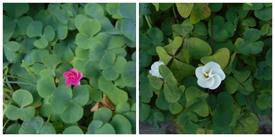 赤と白の花