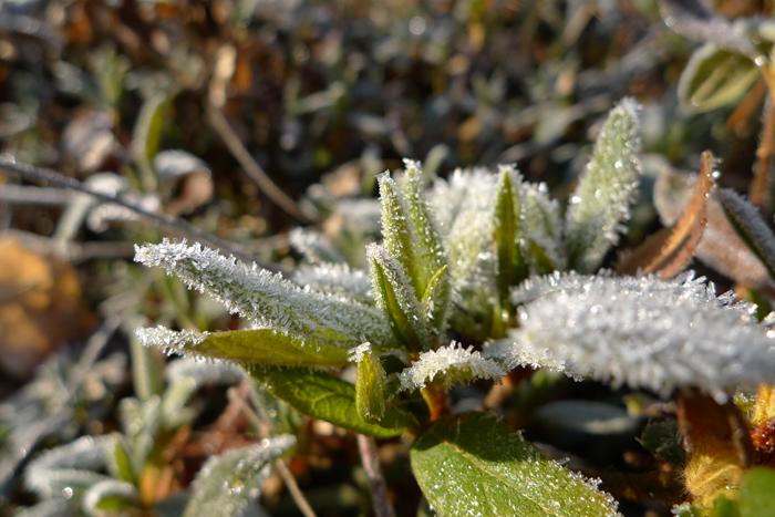 霜 の 風景 1