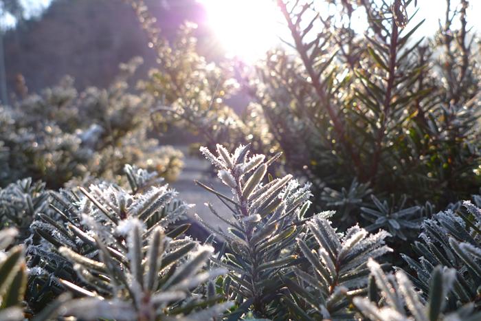 霜 の 風景 3
