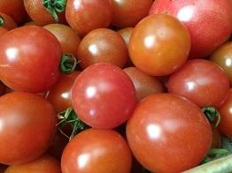 tomato201712.jpg