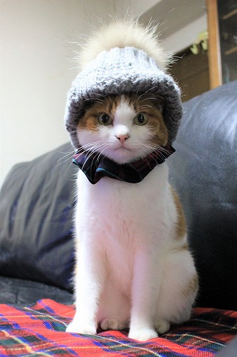 ブログNo.830(今年のシメは、私の帽子とシュシュで~♪)3