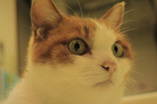 ブログNo.843(無言猫が鳴きっぱなし)5