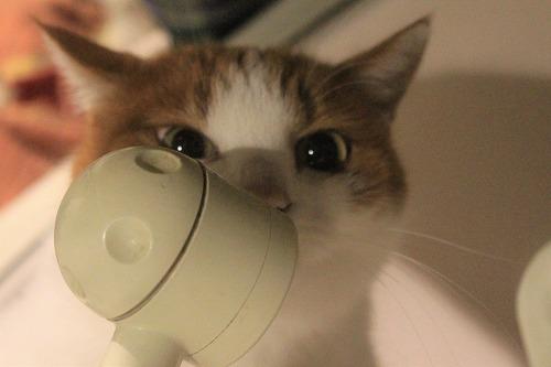 ブログNo.857(蛇口から水にハマった猫)4