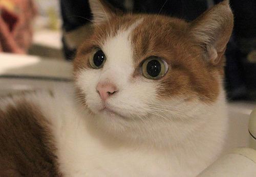 ブログNo.857(蛇口から水にハマった猫)5