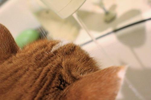 ブログNo.857(蛇口から水にハマった猫)6