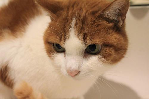 ブログNo.857(蛇口から水にハマった猫)9