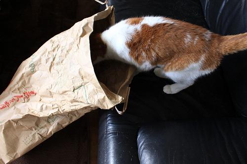 ブログNo.854(米袋と猫)3