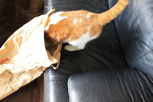 ブログNo.854(米袋と猫)4