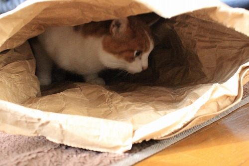 ブログNo.854(米袋と猫)5