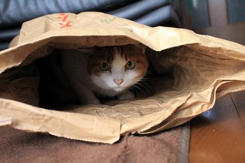 ブログNo.854(米袋と猫)6