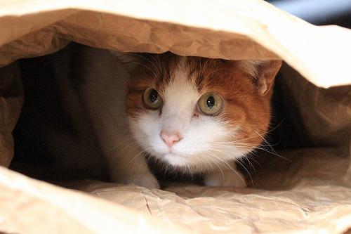 ブログNo.854(米袋と猫)7