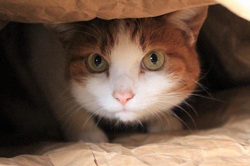 ブログNo.854(米袋と猫)8