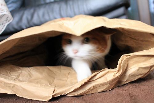 ブログNo.854(米袋と猫)9