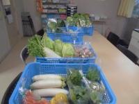 今日も元気な野菜がたくさん集まりました