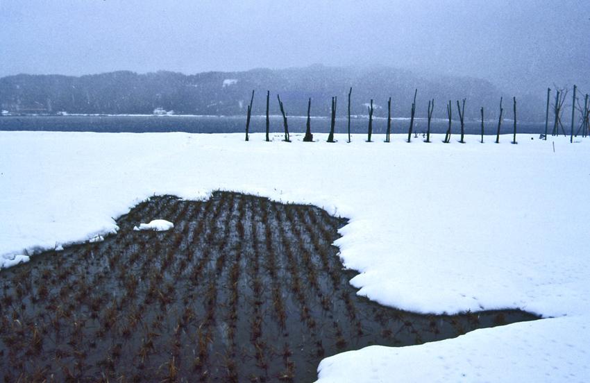 余呉湖(冬)1