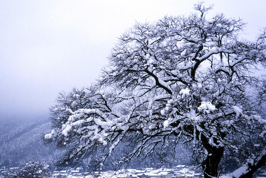 余呉湖(冬)2