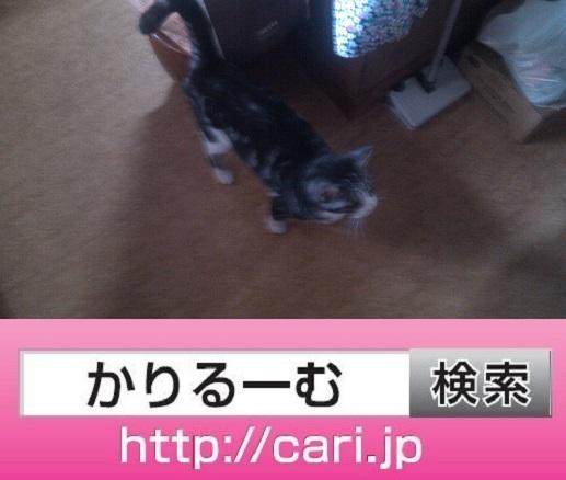 moblog_1505b8f1.jpg