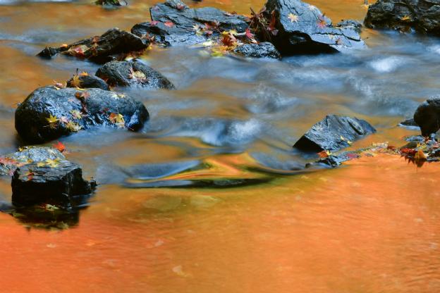 蓬莱山からの流れ・大戸川