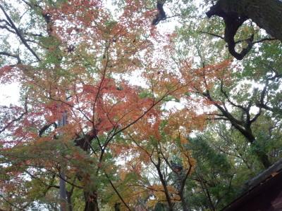photo_derosa_jinndaiji_20161123_8_2016_1123.jpg