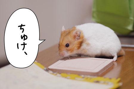 noboru.jpg