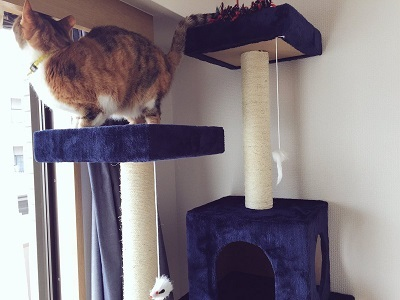 201612-cattower-2.jpg
