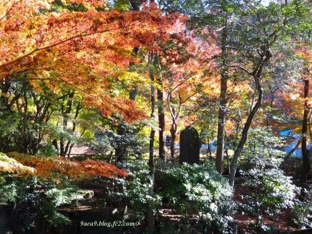 2016 11-26 岐阜公園の紅葉 3