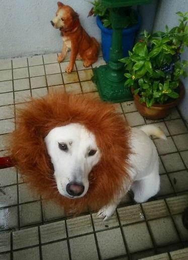 犬 スバル(ワオン)