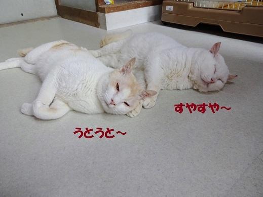 タマ・菊次郎4
