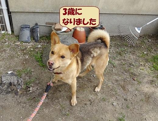 犬 はな2