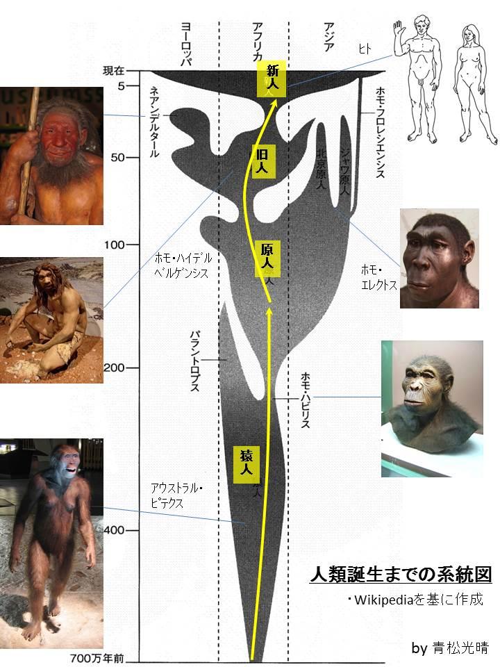 人類進化系統図