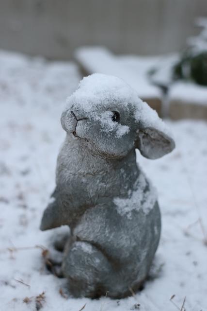 IMG_8668雪