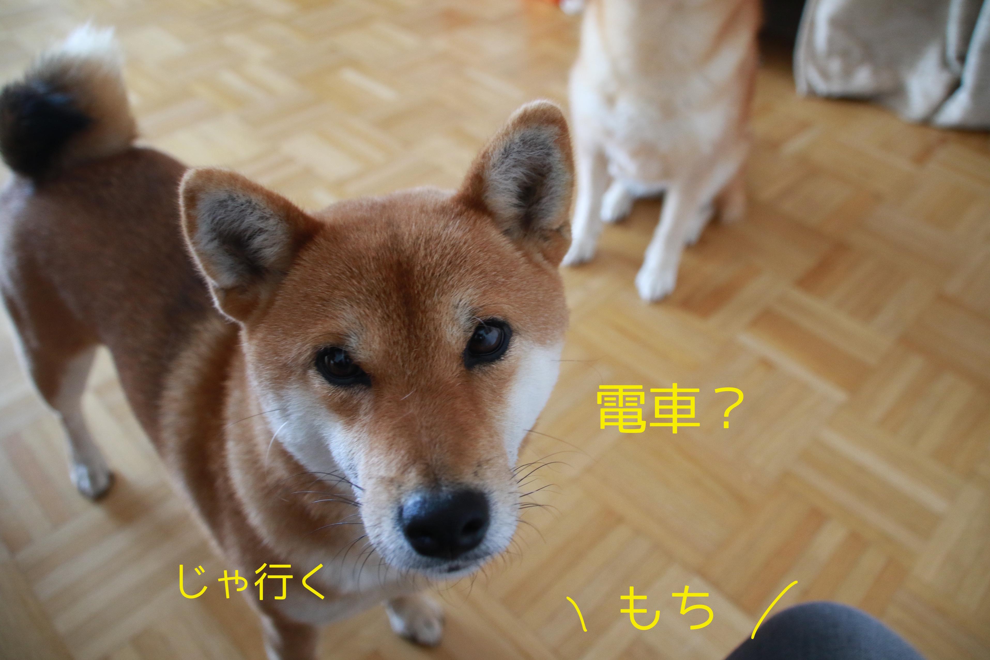 2016112118173431d.jpg