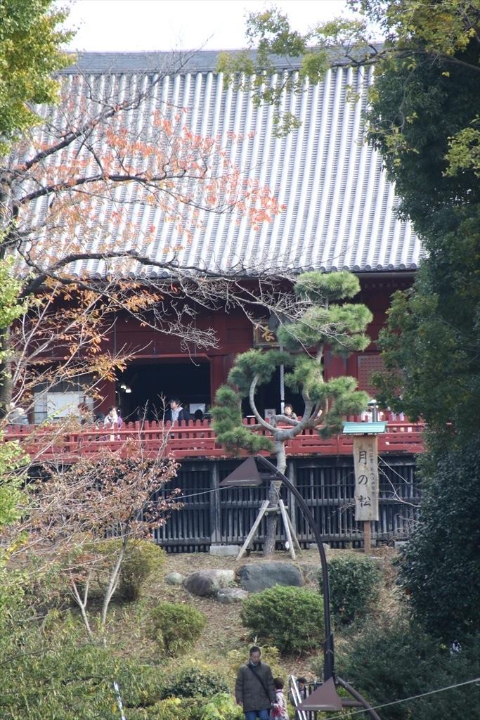 清水観音堂と月の松_2