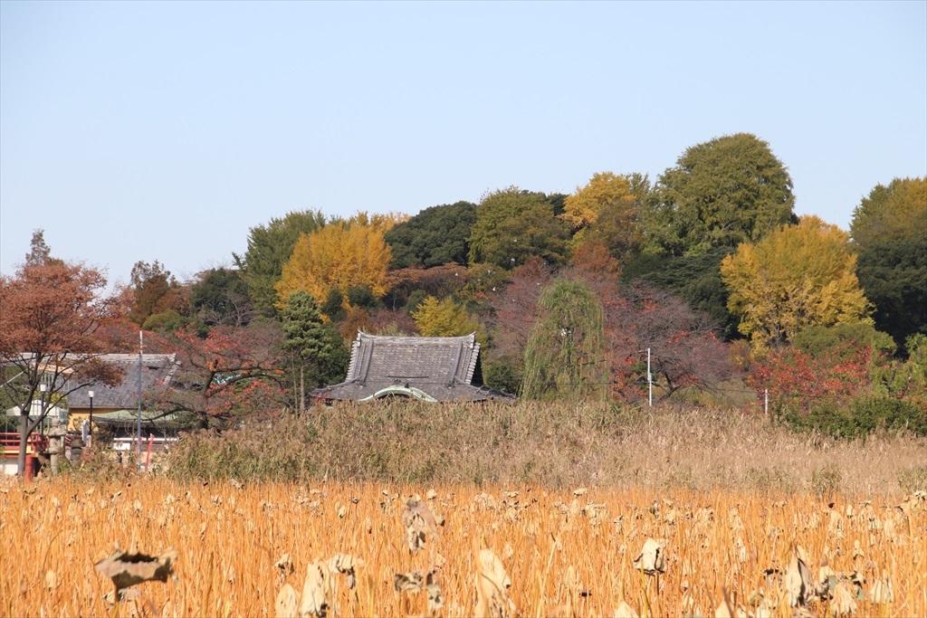 不忍池と池越しの光景_4