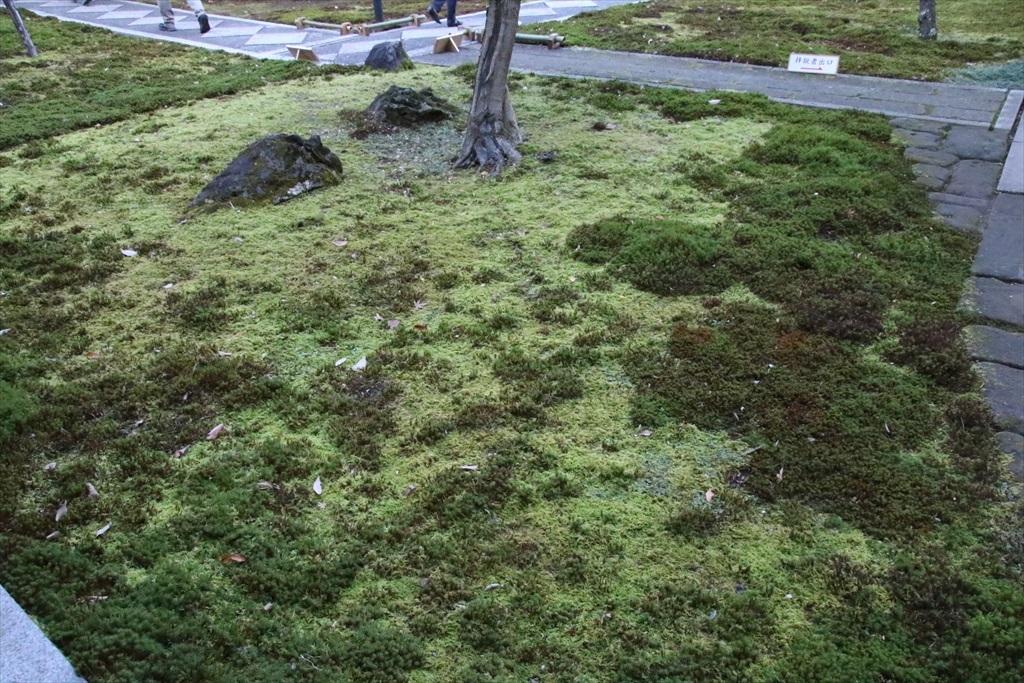 いろいろな苔が生えていた_2