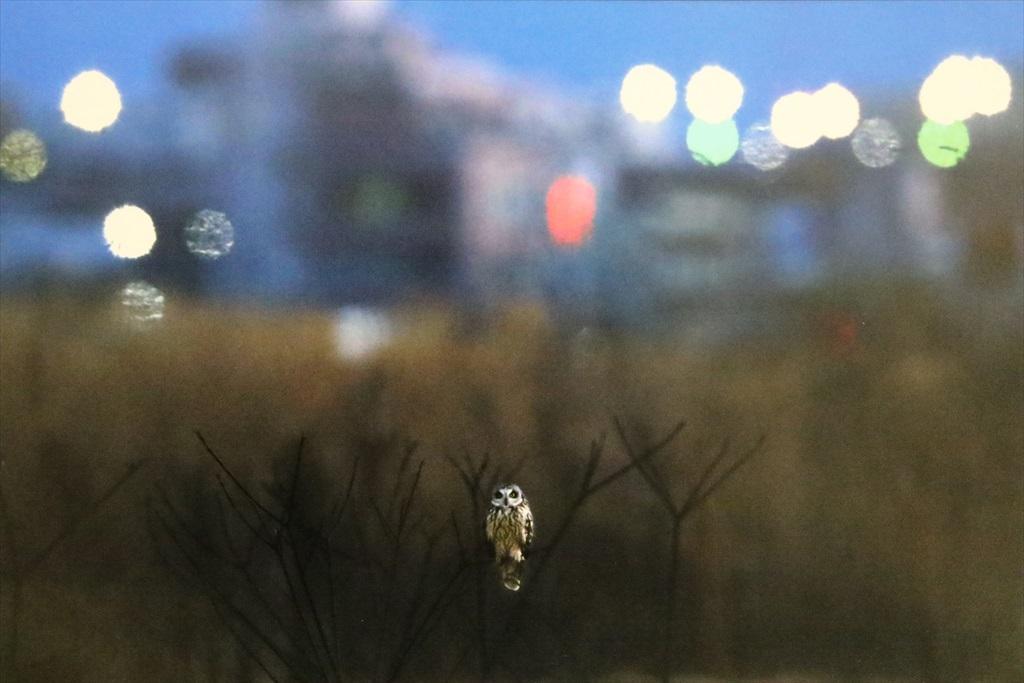 三田市の写真展から_13