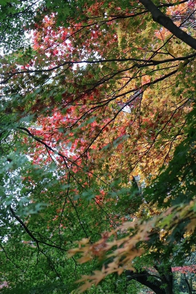 梅見の滝近辺の紅葉_3