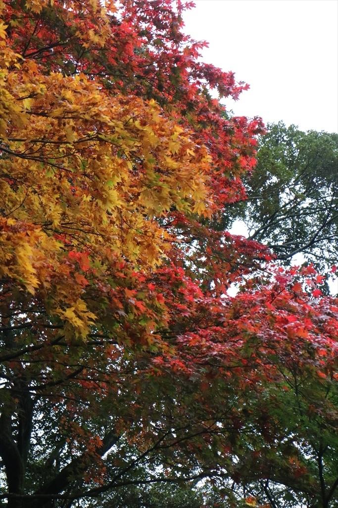 梅見の滝近辺の紅葉_5
