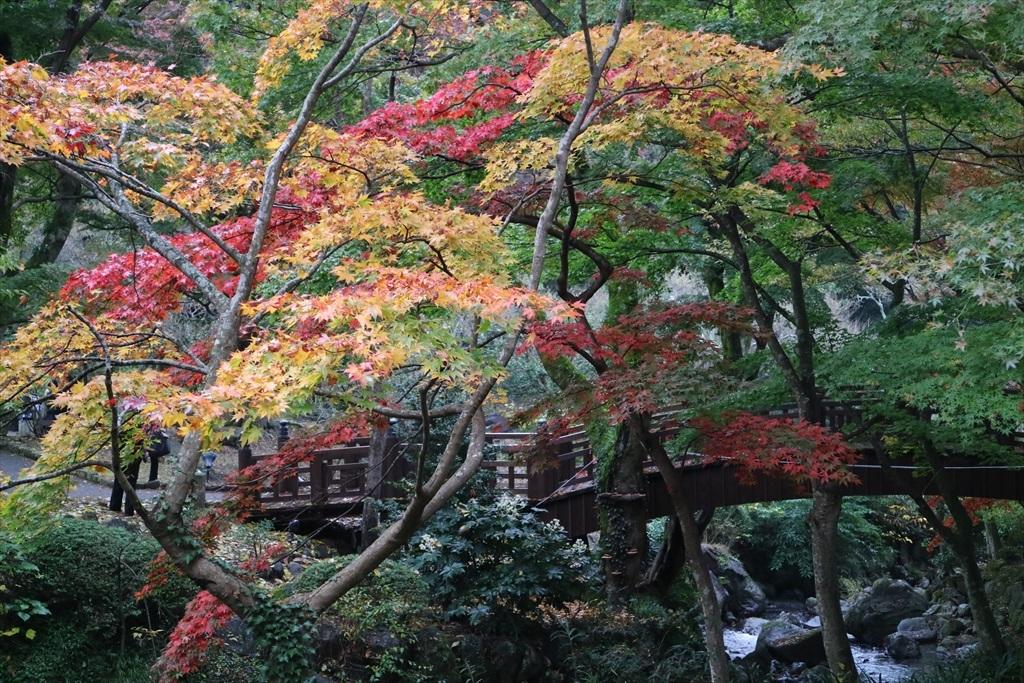 梅見の滝近辺の紅葉_7