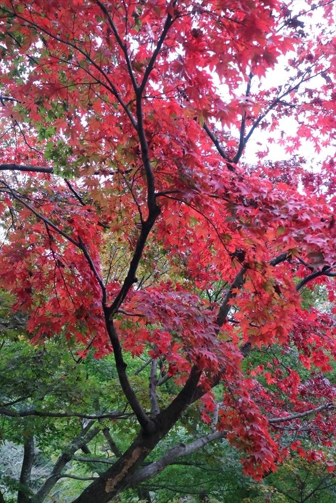 梅見の滝近辺の紅葉_11
