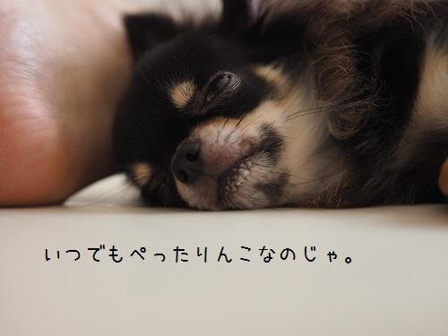P7310046.jpg