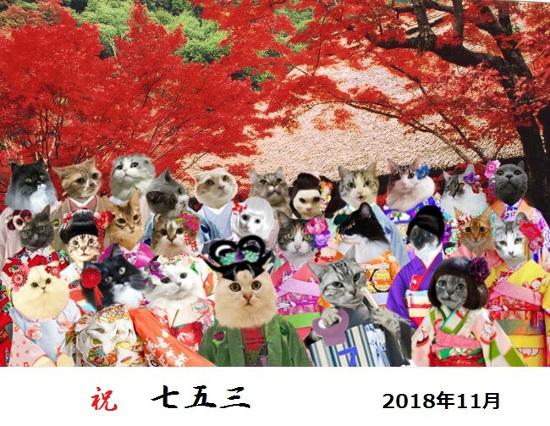 201811251312014c3.jpg