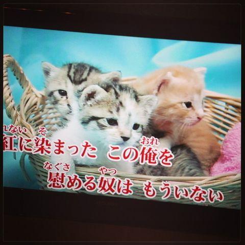 X-JAPANの紅に和む猫画像